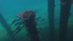 web diving 10