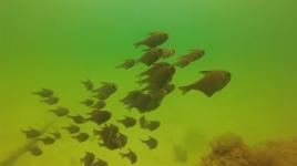 web diving3
