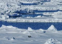 antarctica1_small_045