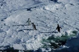 antarctica1_small_052