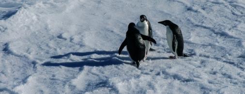 antarctica1_small_053