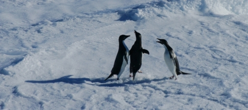 antarctica1_small_060