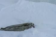 antarctica1_small_079