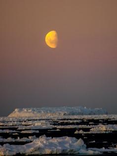 antarctica1_small_084