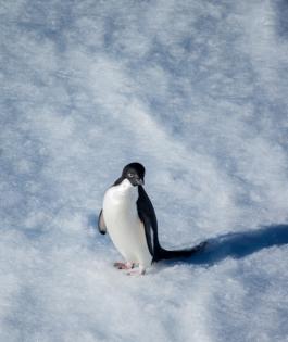 antarctica1_small_104