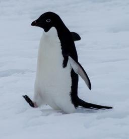antarctica1_small_133
