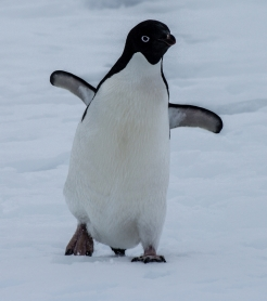 antarctica1_small_134