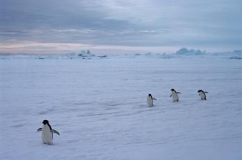 antarctica1_small_139