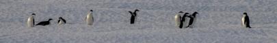 antarctica1_small_192
