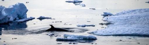 antarctica-279-of-290