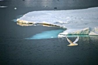 antarctica-286-of-290