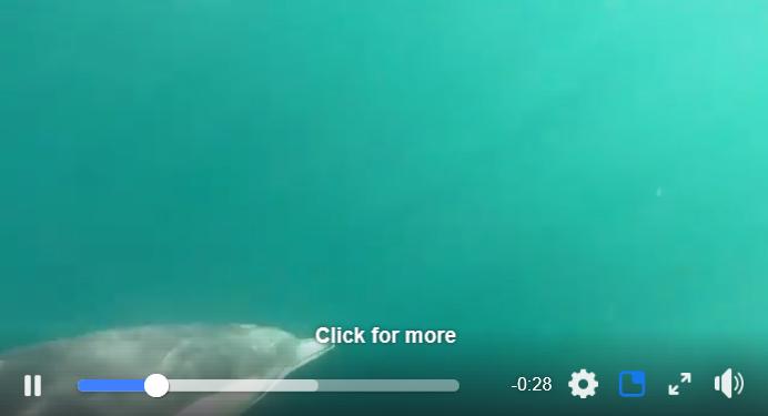 sven delphin